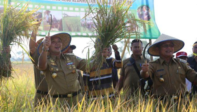 Gubernur Lampung panen perdana Padi Hibrida di Tulang Bawang