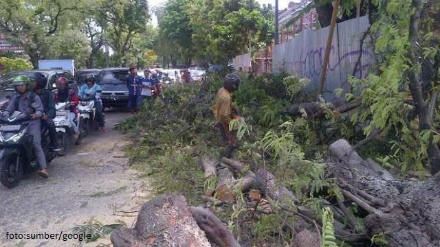 Pengendara Sepeda Motor Tewas Tertimpa Pohon Tumbang