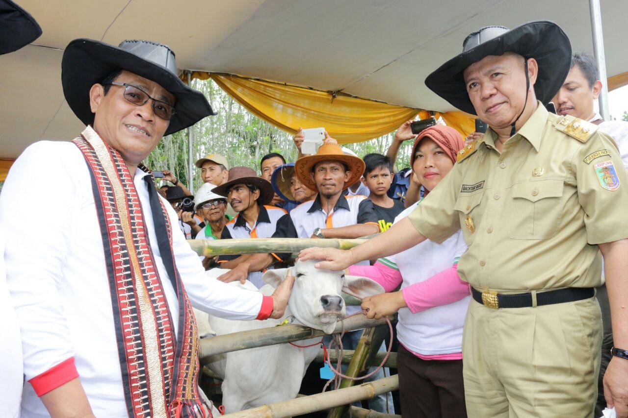 Lampung Panen Pedet 1.000 ekor Hasil Inseminasi Buatan