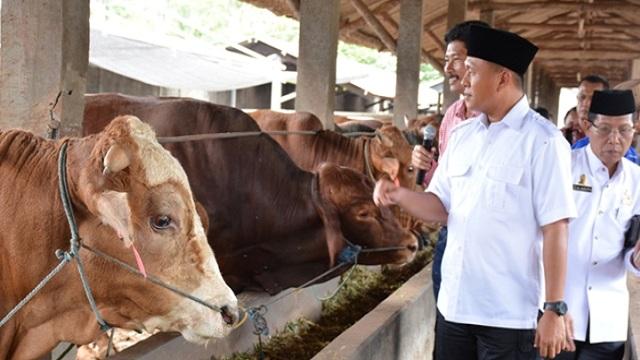 Pemkab Lampung Tengah Gerakkan Program Penggemukkan Sapi Tingkatkan Swasembada Daging