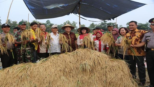 Surplus Air Pertanian, Indeks Pertanaman Lampung Naik 1,5 Menjadi 1,8
